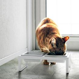 Rangement accessoires pour chiens et chats